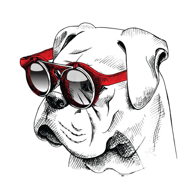 Dog-shutterstock_374363242