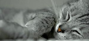 Calm_cat