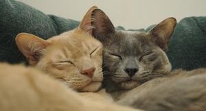 Catfriends_(1)