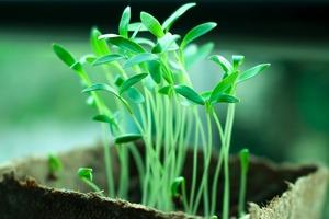 Plants-2411458_1280