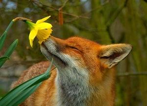 Fox_flower