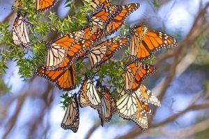 African_monarchs